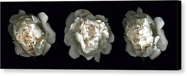 Scanography Canvas Print featuring the photograph Peony Tryptic by Deborah J Humphries