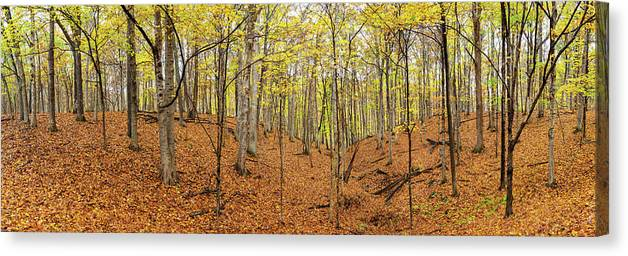 Photography Canvas Print featuring the photograph Trees In A Forest, Stephen A. Forbes by Panoramic Images