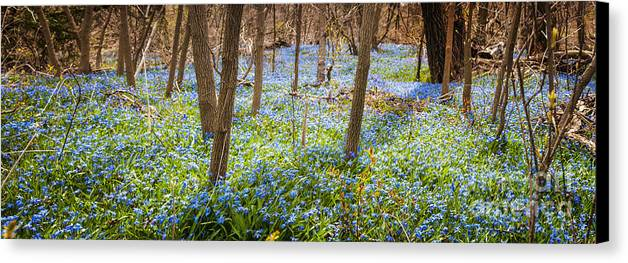 Flowers Canvas Print featuring the photograph Carpet Of Blue Flowers In Spring Forest by Elena Elisseeva