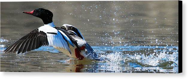 Birds Canvas Print featuring the photograph Clear For Takeoff by Taylor Howe