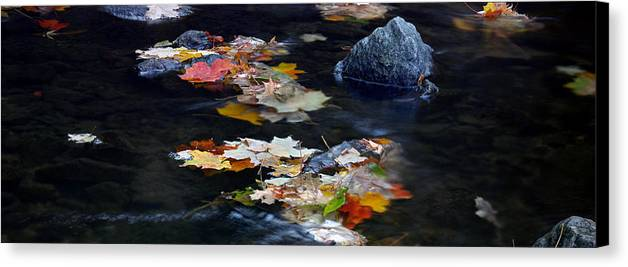 Landscape Canvas Print featuring the photograph Maple Leaves-0005 by Sean Shaw