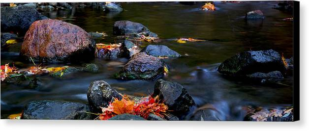 Landscape Canvas Print featuring the photograph Maple Leaves-0007 by Sean Shaw