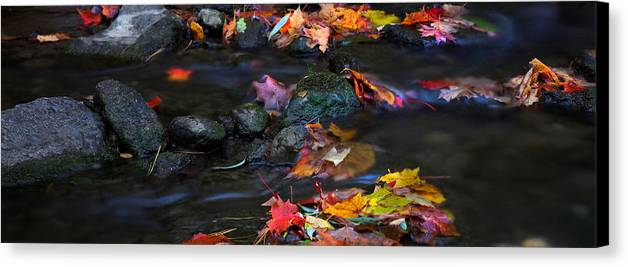 Landscape Canvas Print featuring the photograph Maple Leaves-0009 by Sean Shaw