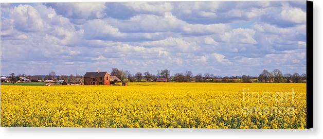Canola Canvas Print featuring the photograph Canola Field by John Edwards