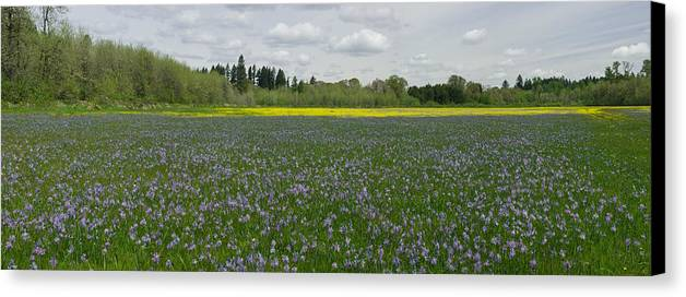 Field Of Camas & Western Buttercup; Meadow Of Purple & Yellow Wildflowers; Spring Wildflowers; Horiz Canvas Print featuring the photograph Field Of Camas And Western Buttercup by John Higby