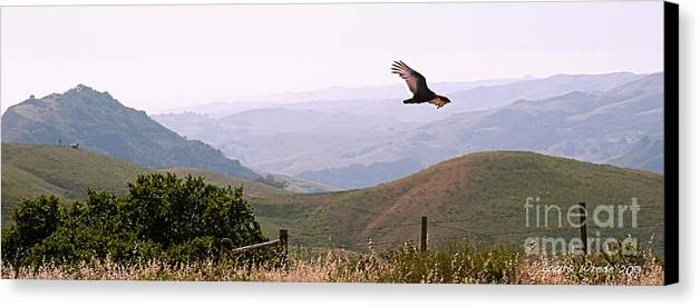 Paso Robles Canvas Print featuring the photograph Soaring Over California - Condor In Morro Bay Coastal Hills by Artist and Photographer Laura Wrede