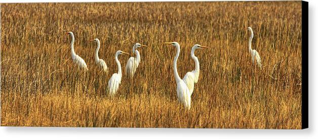 Cranes Canvas Print featuring the photograph Which-way by Ronald Lafleur