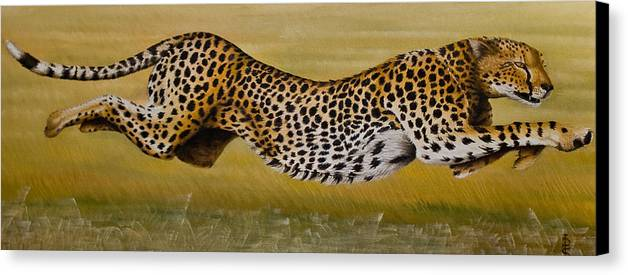 Cheetah Flying Run Speed Stretch Chase Canvas Print featuring the painting Frozen At Full Charge by Pauline Sharp