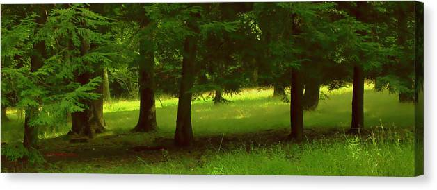 Nature Canvas Print featuring the photograph Enchanted Forest by Linda Sannuti
