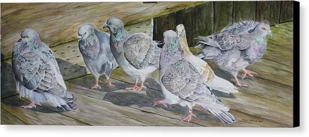 Pigeons Canvas Print featuring the painting Gossiping by Helen Shideler