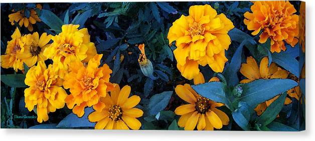 Flowers Canvas Print featuring the painting Goldies by Diana Gonzalez