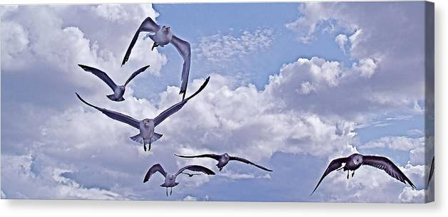 Gulls Canvas Print featuring the photograph Gulls Will Be Gulls by Mike Shepley DA Edin