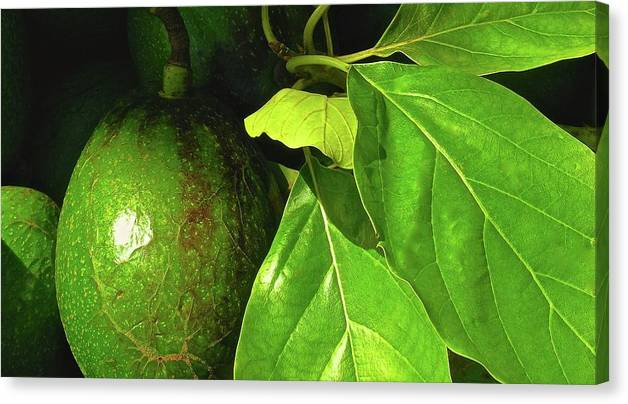 Hawaiian Avocados Canvas Print featuring the photograph A Place In The Sun by James Temple