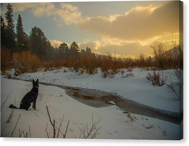 Winter Creek Solace by Brian Lynch