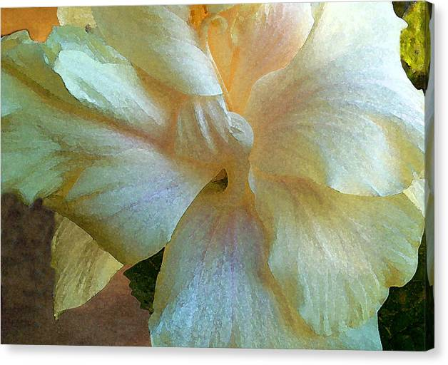 Hawaiian Flowers Canvas Print featuring the photograph Evening Hibiscus by James Temple