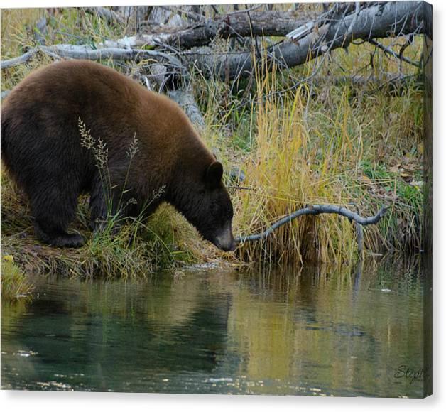 Taylor the Bear by Steph Gabler
