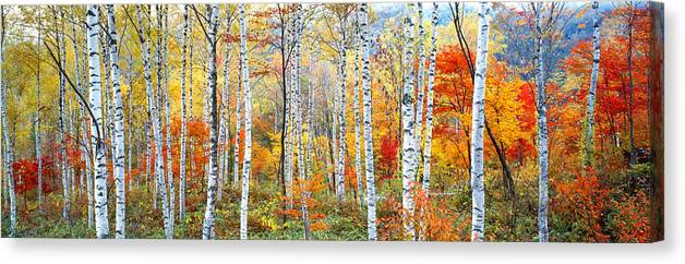 Photography Canvas Print featuring the photograph Fall Trees, Shinhodaka, Gifu, Japan by Panoramic Images