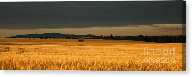 Golden Canvas Print featuring the photograph Morning's Glow by Beve Brown-Clark Photography