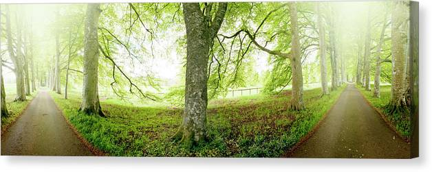 Panoramic Canvas Print featuring the photograph Choice, Which Path To Take by Kathy Collins