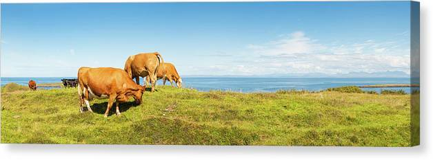 Water's Edge Canvas Print featuring the photograph Cattle Grazing In Picturesque Meadow by Fotovoyager