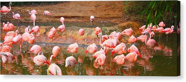 Pink Flamingos Resting Canvas Print featuring the photograph Pink Flamingos Resting by Dan Sproul