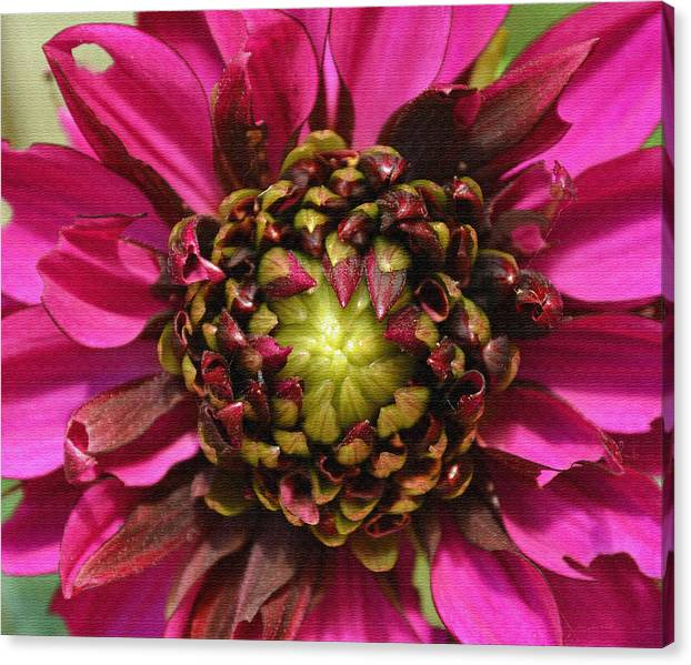Limited Time Promotion: Dahlia  Stretched Canvas Print