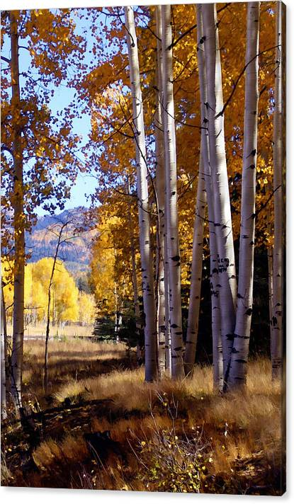 Limited Time Promotion: Autumn Paint Chama New Mexico Stretched Canvas Print