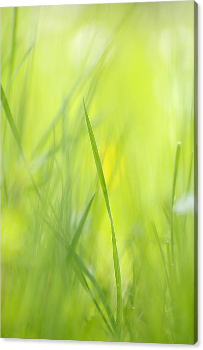Limited Time Promotion: Blades Of Grass - Green Spring Meadow - Abstract Soft Blurred Stretched Canvas Print