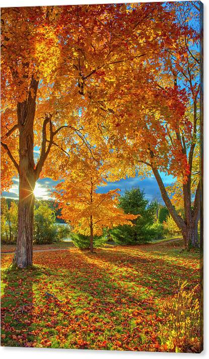 Limited Time Promotion: Tree Magic  Stretched Canvas Print by Juergen Roth