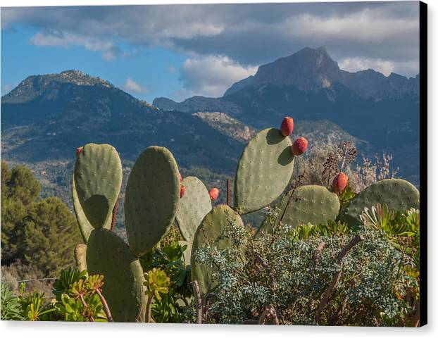 Prickly Pear Canvas Print featuring the photograph Prickly Pear Cactus And Mountains by Ingela Christina Rahm