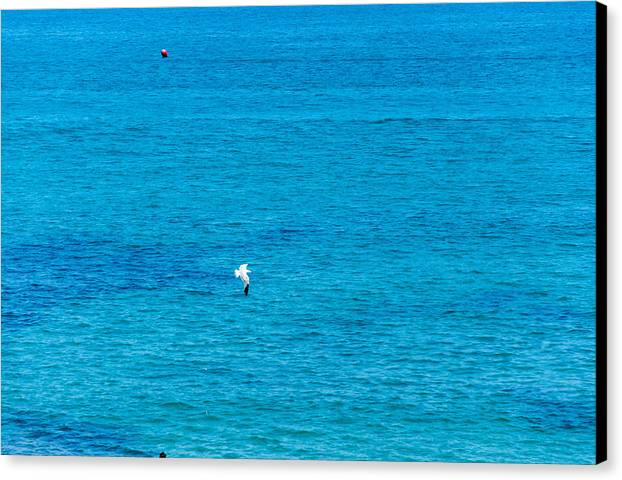 Ocean Canvas Print featuring the photograph Seagull Cruising Over Azure Blue Sea by Ingela Christina Rahm