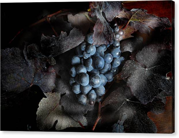 Canvas Print featuring the photograph grape vine I by Jon Daly