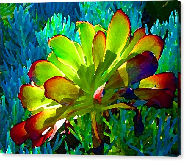 Succulent Backlit on Blue 1 by Amy Vangsgard