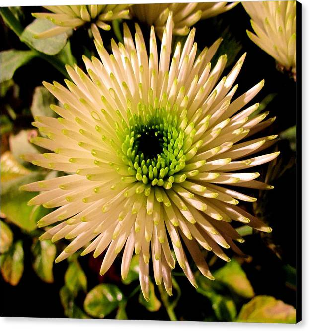 Flower Canvas Print featuring the photograph Cut Flowers by Joyce Woodhouse