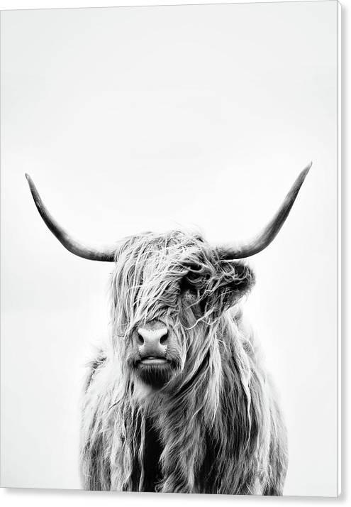 Portrait Of A Highland Cow - Vertical Orientation by Dorit Fuhg