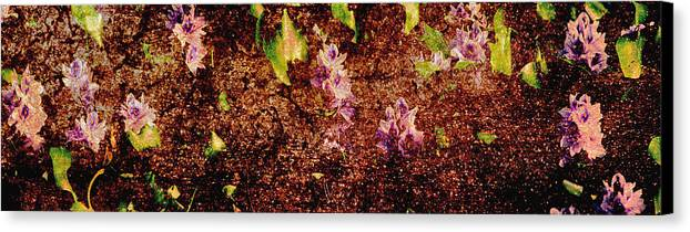 Abstract Canvas Print featuring the photograph Water Flowers Vietnam by Skip Nall