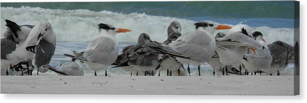 Birds Canvas Print featuring the photograph Party At The Beach by Amanda Vouglas