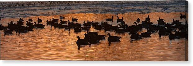 Geese Canvas Print featuring the photograph Sunset Silhouettes by Paulina Roybal