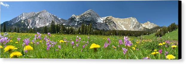 Wild Flowers Canvas Print featuring the photograph The Flower Field by Kevin Spriggs