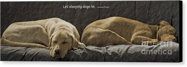 Sleeping Dogs Canvas Print featuring the photograph Let Sleeping Dogs Lie by Gwyn Newcombe