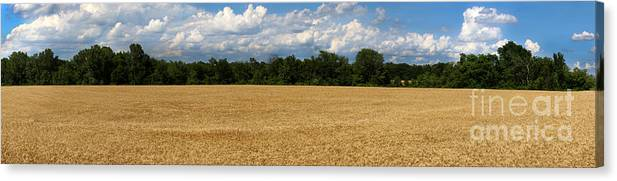 Wheat Canvas Print featuring the photograph Kansas Wheat Field 5a by Gary Gingrich Galleries