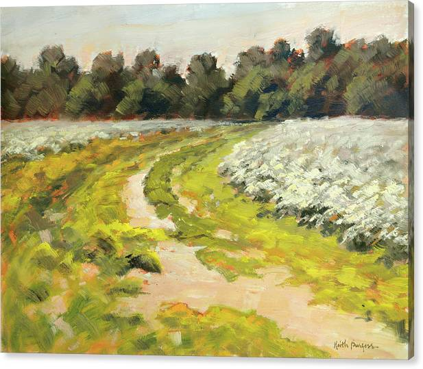 October Cotton Fields by Keith Burgess