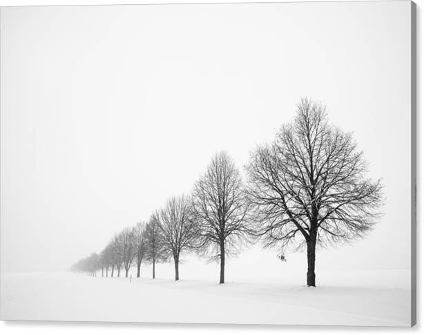 Limited Time Promotion: Avenue With Row Of Trees In Winter Stretched Canvas Print