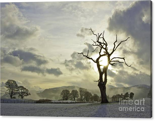 Limited Time Promotion: Light Of The Tree Stretched Canvas Print