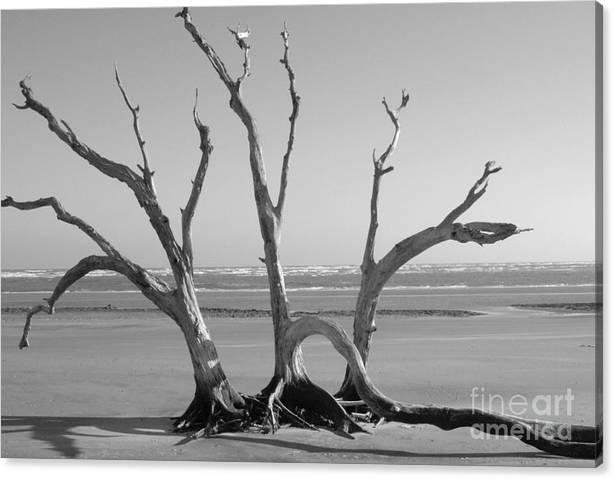 Limited Time Promotion: Lonesome Tree Stretched Canvas Print
