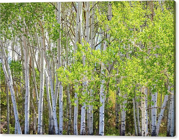Limited Time Promotion: Getting Lost In The Wilderness Stretched Canvas Print