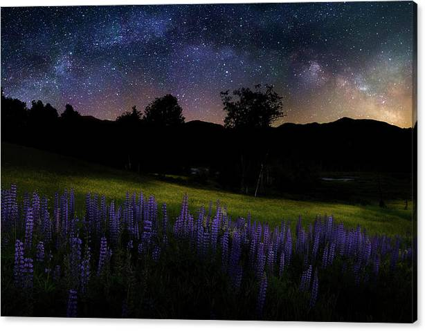 Limited Time Promotion: Night Flowers Stretched Canvas Print