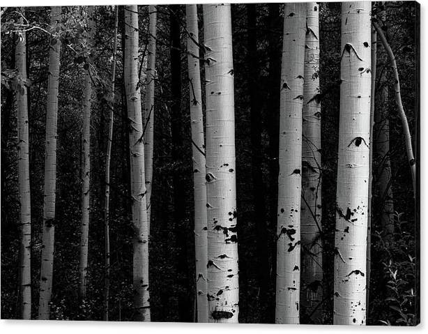 Limited Time Promotion: Shades Of A Forest Stretched Canvas Print