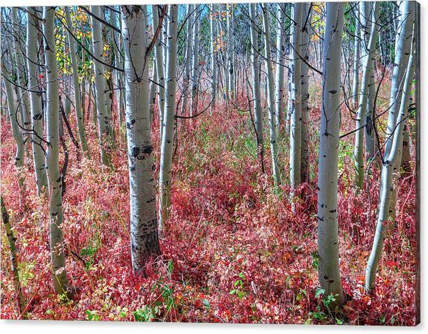 Limited Time Promotion: Mystic Red Forest Stretched Canvas Print by James BO Insogna