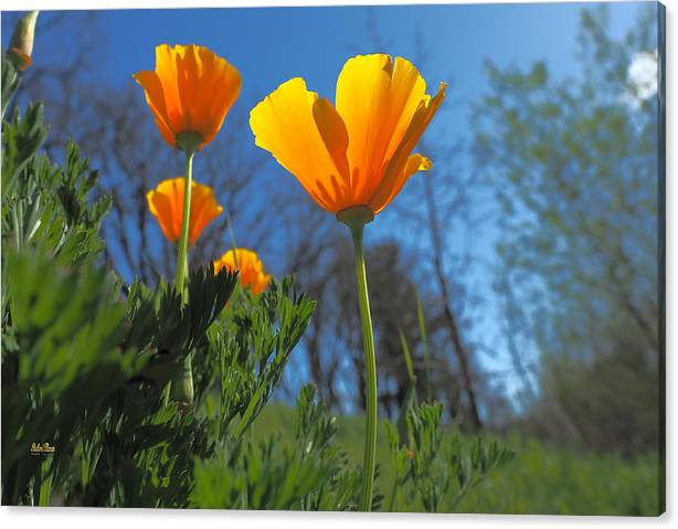 Limited Time Promotion: Four Gold Cups Stretched Canvas Print by Richard Thomas